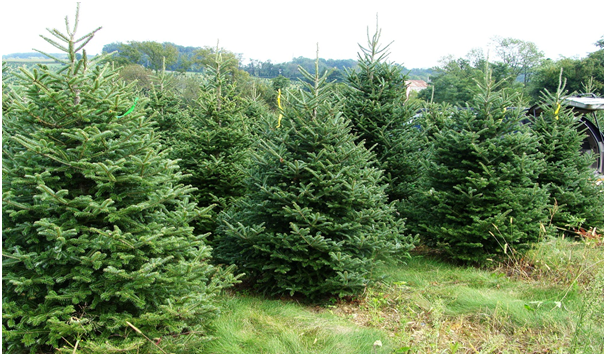 How To Keep Your Christmas Tree Fresh For Longer